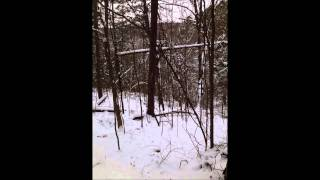 Video 131203 002 1 Series of mixed howls with one real strange one download MP3, 3GP, MP4, WEBM, AVI, FLV Juli 2018