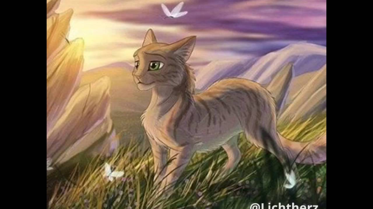 feuerstern und sandsturm pmv show me love warriorcats youtube. Black Bedroom Furniture Sets. Home Design Ideas