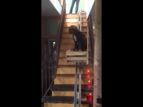Stair Elevator For Dog With Mobility Challenges Youtube