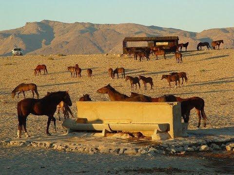 The Wild Horses of Namib Deser...