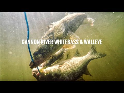 White Bass Fishing - Cannon River RollerCoaster Morning!!!!