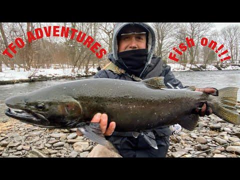 Fly Fishing For Steelhead And King Salmon In Pulaski!!