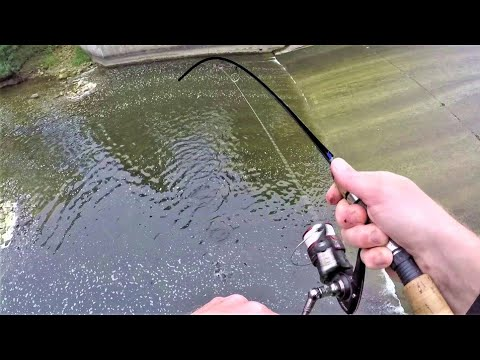 SPILLWAY FISHING For Flathead Bait!! (Surprise Catch)