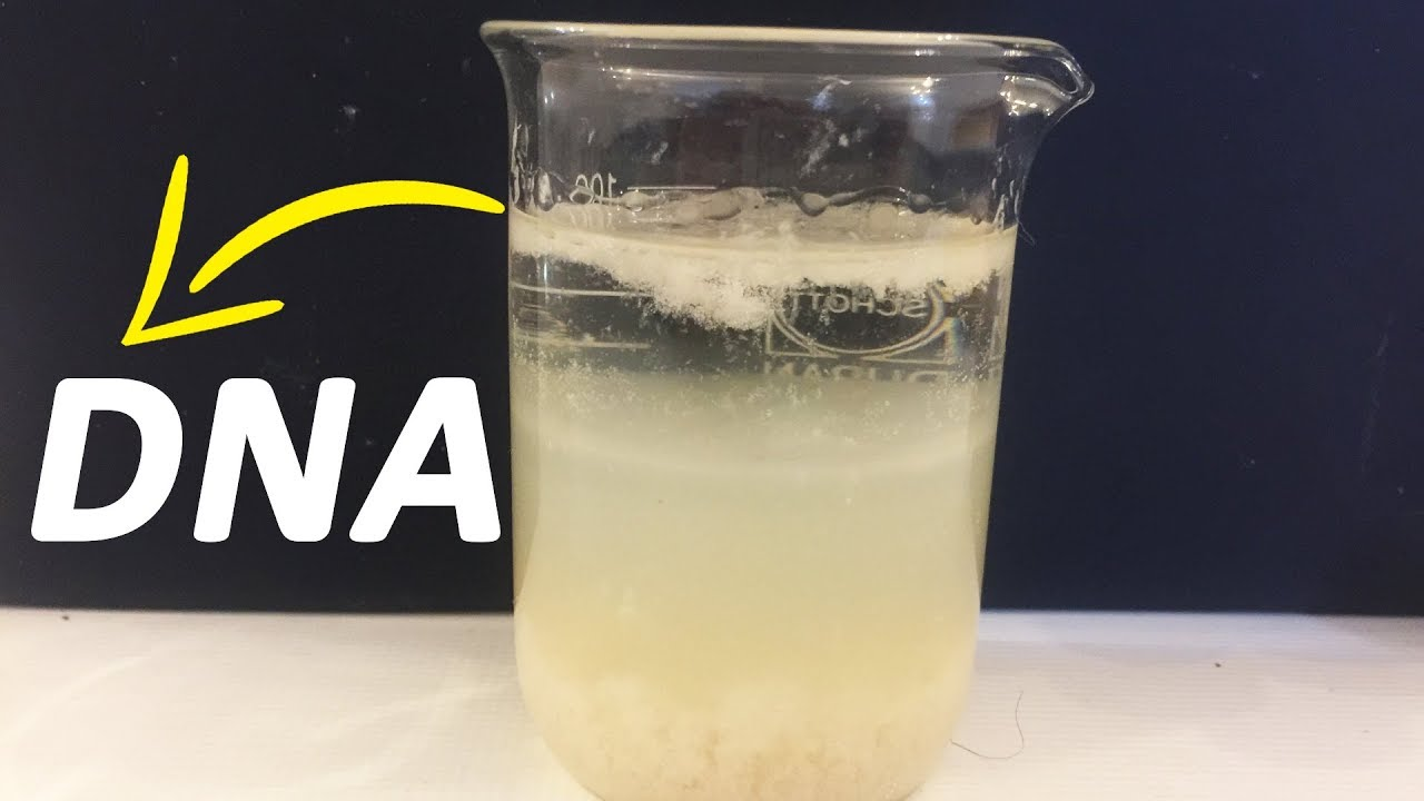 How To Extract DNA From Banana At Home