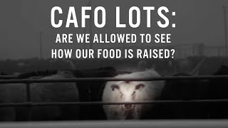 CAFO Lots: Are We Allowed to See How Our Food Is Raised?