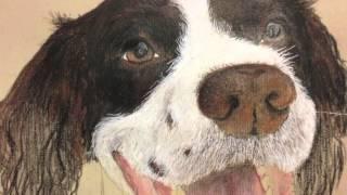 Philip Douglas Art: Gilbert The Springer Spaniel