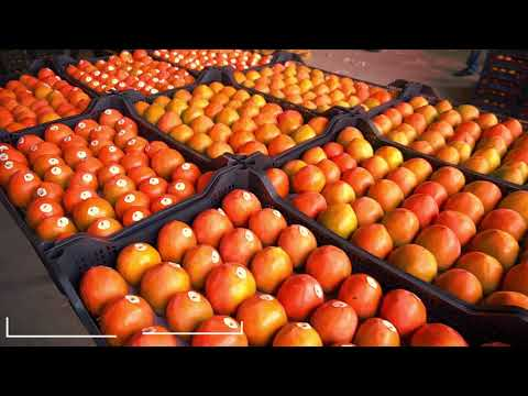Association of persimmon producer and exporters of Azerbaijan