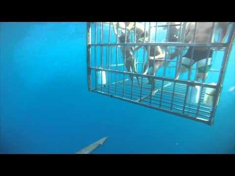 7/24/2013 SHARK CAGE DIVING NORTH SHORE OAHU, HAWAII NORTH SHORE SHARK ADVENTURES