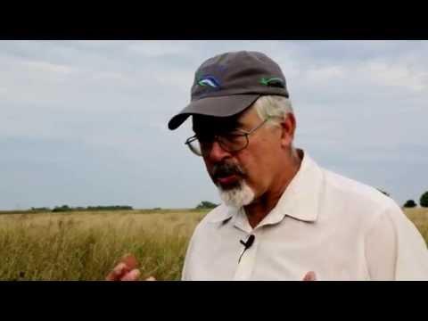 PuraMaize Combating GMO Contamination