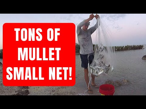 How To Catch Mullet For Bait With A SMALL Cast Net! (By Captain Cody)