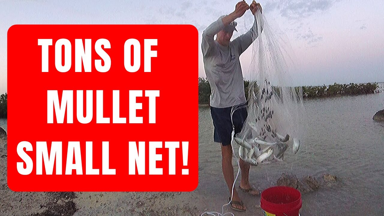 Smalle Kast Wit.How To Catch Mullet For Bait With A Small Cast Net Youtube