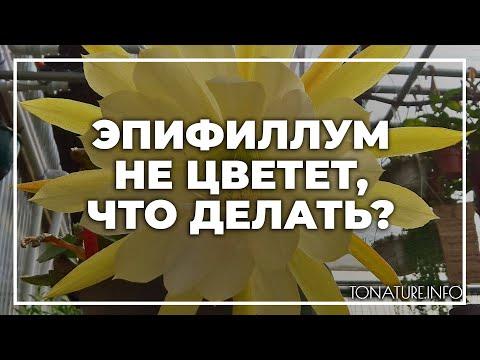 Эпифиллум не цветет, что делать? | toNature.Info