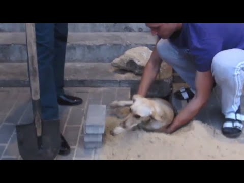 Watch This Harrowing Rescue Of A Pregnant Dog Buried Alive Under A Paved Sidewalk