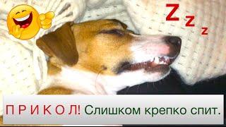 Приколы с собаками. Собака зомби спит с открытыми глазами. Elli Di. Смешное видео с животными.