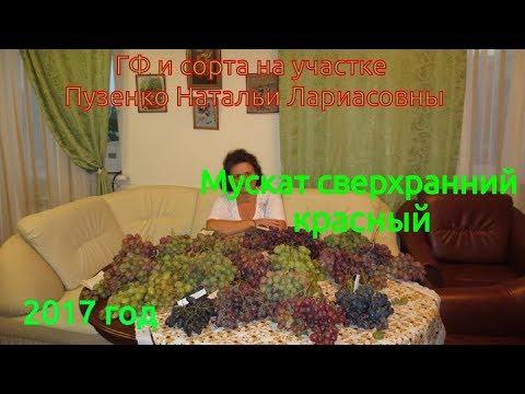 Мускат сверхранний красный- виноградник Пузенко Натальи Лариасовны