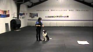 Complete Idiot's Guide To Positive Dog Training Online Class