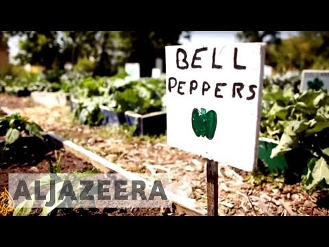 earthrise - Detroit's Urban Farming Revolution