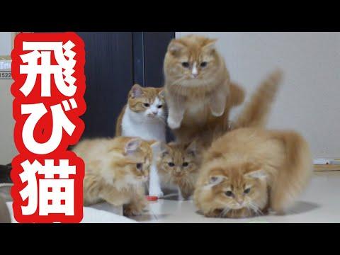 猫のジャンプ競争 ~ Cats' jumping competition ~