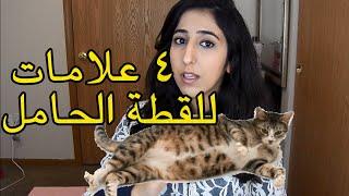 كيف تعرف أن قطتك حامل؟ - HIND DEER