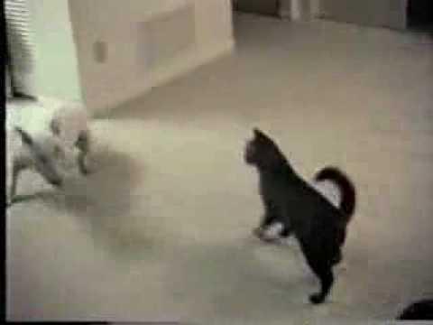 cat stevens photos