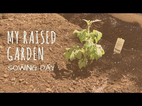 Growing a Raised Garden in Miami: Sowing Day