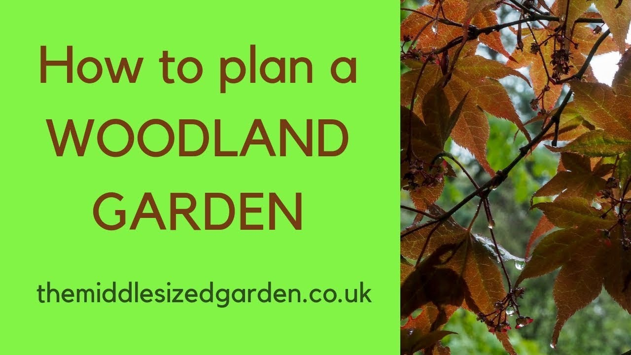 How To Plan A Woodland Garden Youtube