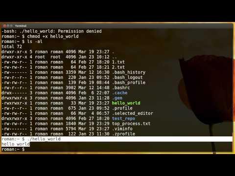 Научись Linux: запуск собственных скриптов (эпизод 12)