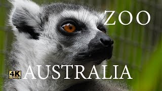 ZOO ANIMALS OF AUSTRALIA 4K | VÍDEO CINEMATIC TRAVEL | GOLD COAST - AUSTRALIA
