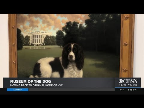 Pet Central - Dog lovers: another reason why you may want to visit New York