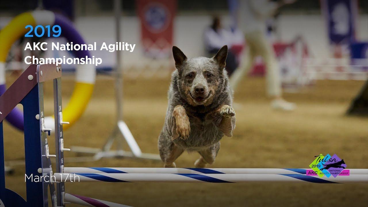 Akc 2019 National Agility Championships Youtube