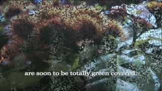 Tango Mango (2005) Creole (english Sub)