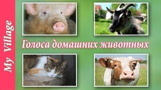 Голоса домашних животных