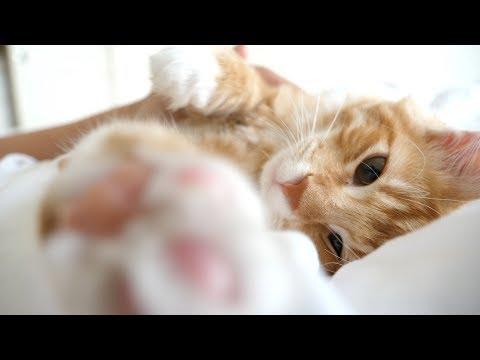 세상에서 가장 다정한 고양이가 깨우는 아침 간접체험