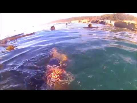 Norcal Spearfishing October 2016