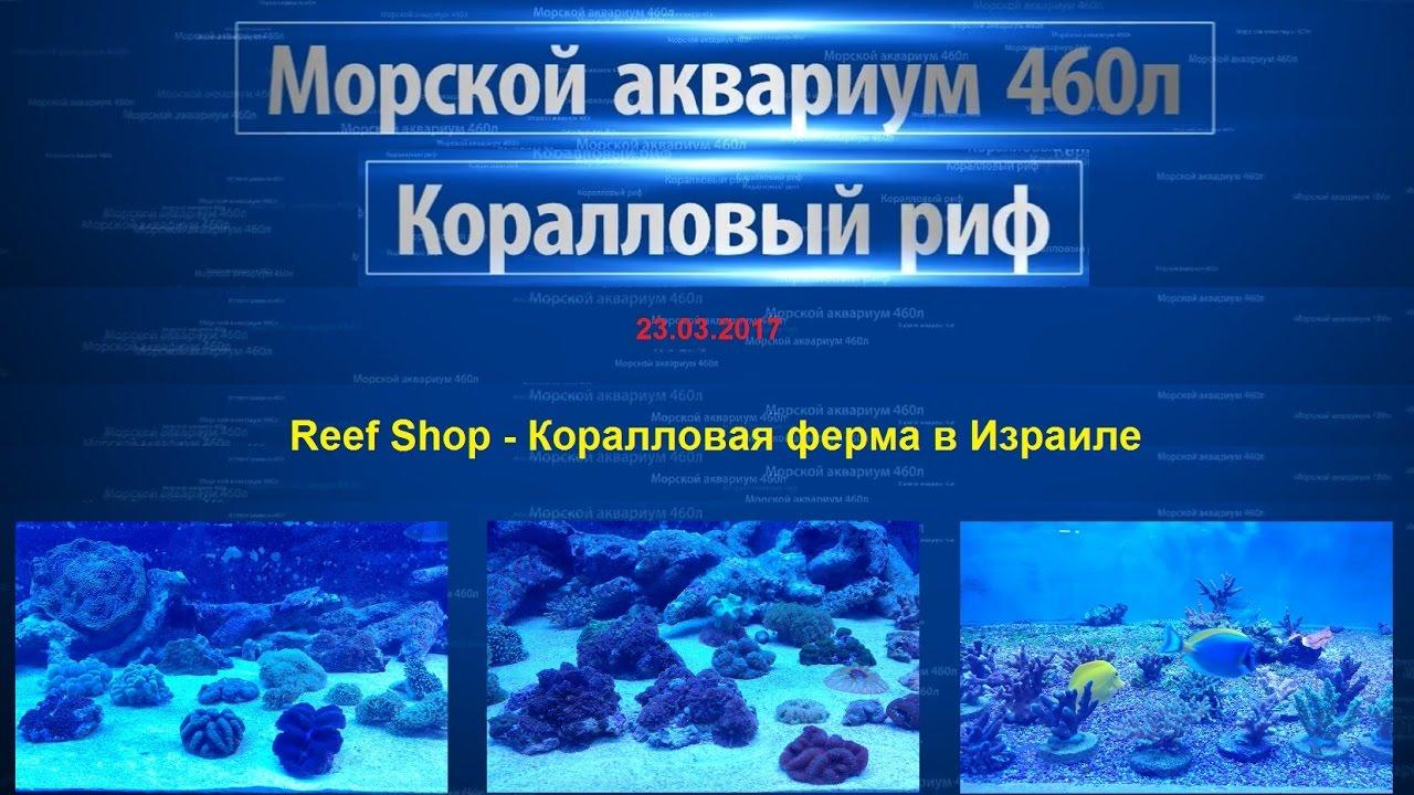 Грунты 225; декорации для аквариумов декорации 797; аквариумные камни, коряги, кораллы камни 64; украшающие кораллы для аквариумов кораллы 112; коряги 20; товары для отделки аквариумов облицовка для аквариума 27 ; декоративные ракушки для аквариумов ракушки 54; растения для декора.