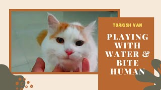 Millo The Turkish Van : Playing With Water and Bite Human