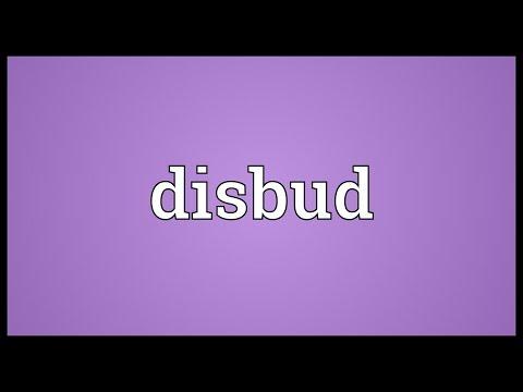 Header of disbud