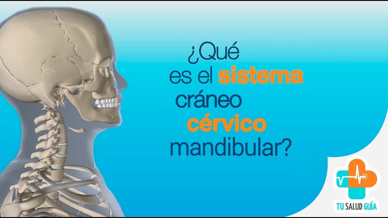 Sistema Cráneo Cérvico Mandibular - YouTube
