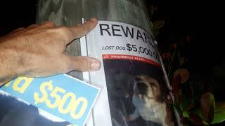 6 tips for putting up posters to find lost pets, cats and dogs. Work with other people