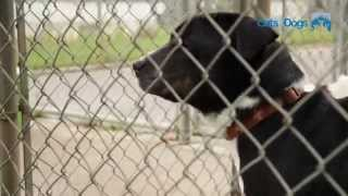 Bath Cats & Dogs Home - Support Adoption for Pets Celebration Grant Video