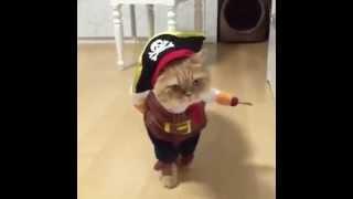 Puss N Boots Cat [en.vonvon.me]