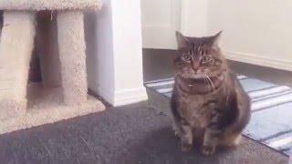 Реакция котов на #котороботов