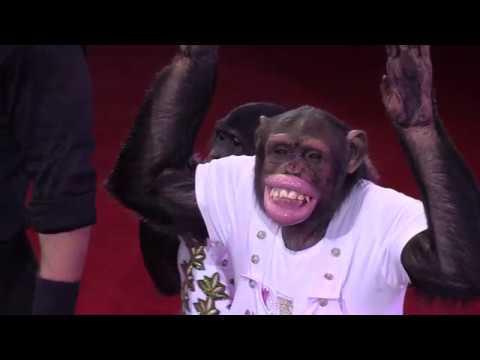Дан Запашный / Акробатическое трио с шимпанзе (2018) FHD