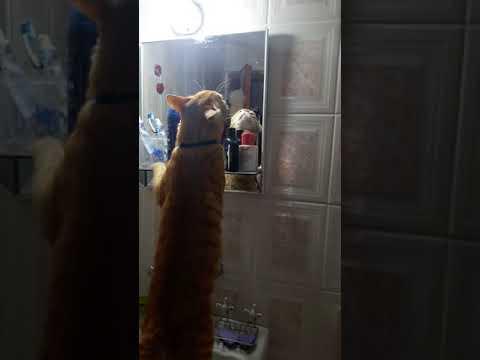 Kedi kendine hayran