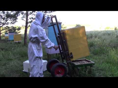 361Сделай своими руками пчеловодство