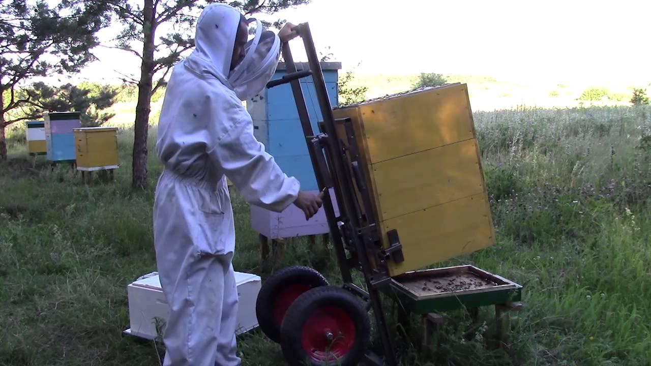 Объединение пчело семей в июне спросил беспокойно