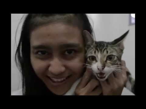 Malu Sama Kucing - Romaria (cover by ines)