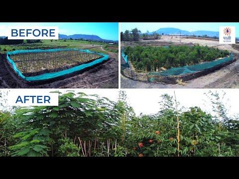 Miyawaki Magic: From Barren Land to Dense Forest | मियावाकी तकनीक का प्रभाव | Paani Foundation