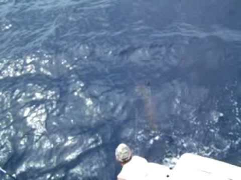 Billy V's Blue Marlin at the boat  Costa Rica December 2008
