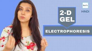 Two Dimensional (2D) GEL Electrophoresis | Principle | Hindi